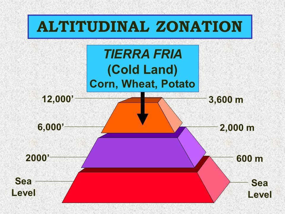 ALTITUDINAL ZONATION Sea Level 6,000' 2000' 2,000 m 600 m Sea Level 12,000' 3,600 m TIERRA FRIA (Cold Land) Corn, Wheat, Potato