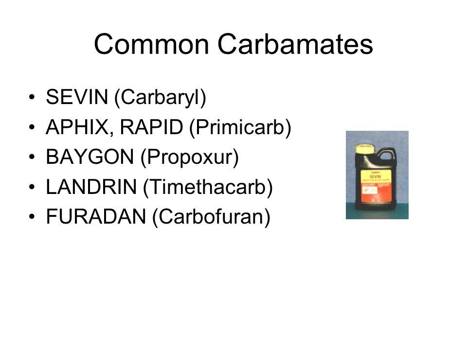 Common Carbamates SEVIN (Carbaryl) APHIX, RAPID (Primicarb) BAYGON (Propoxur) LANDRIN (Timethacarb) FURADAN (Carbofuran)