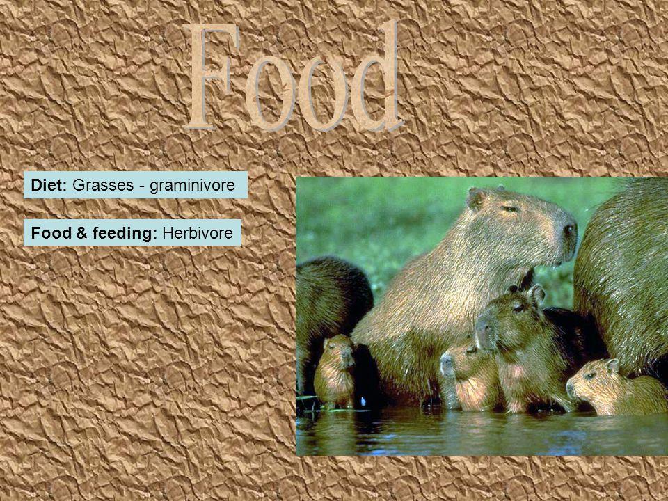 Diet: Grasses - graminivore Food & feeding: Herbivore