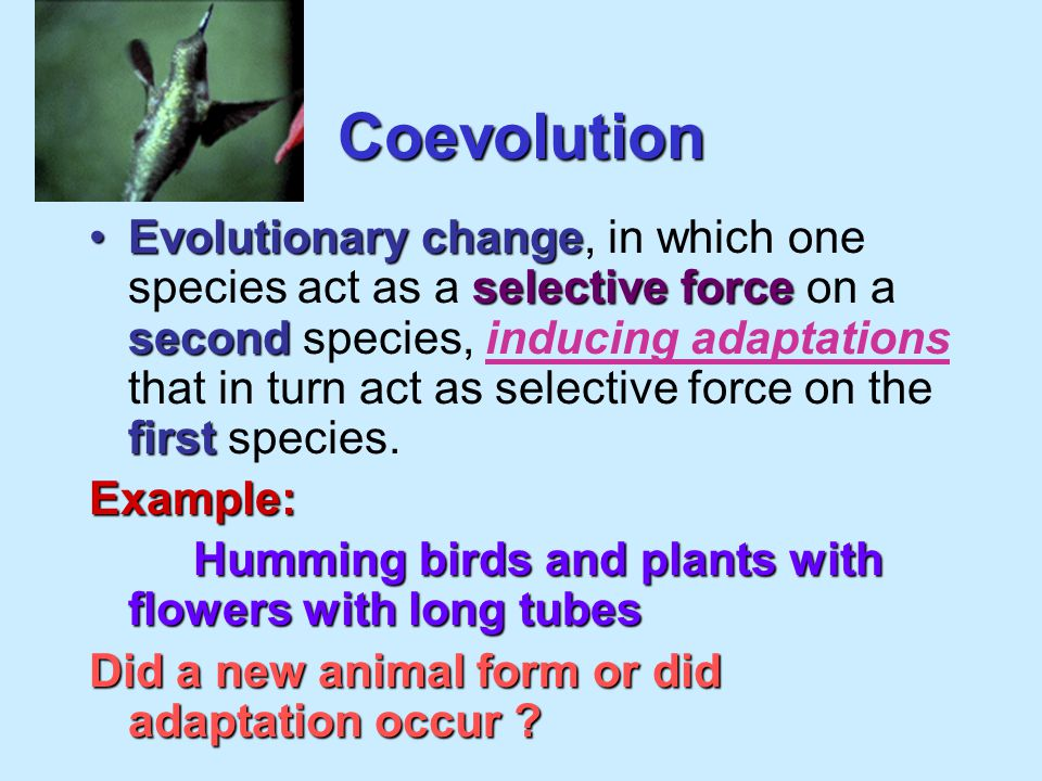 Speciation evolutionThe evolution of new species. Microevolution: adaptation..no new animal