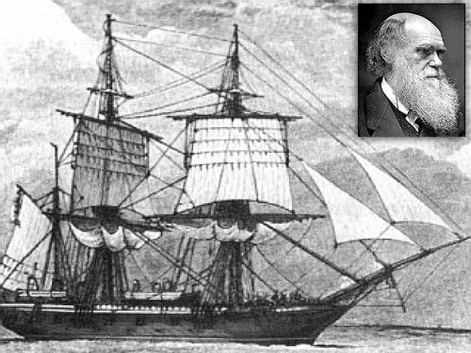  From 1831 to 1836 Darwin served as naturalist aboard the H.M.S. Beagle on a British science expedition around the world.  He observed much variatio