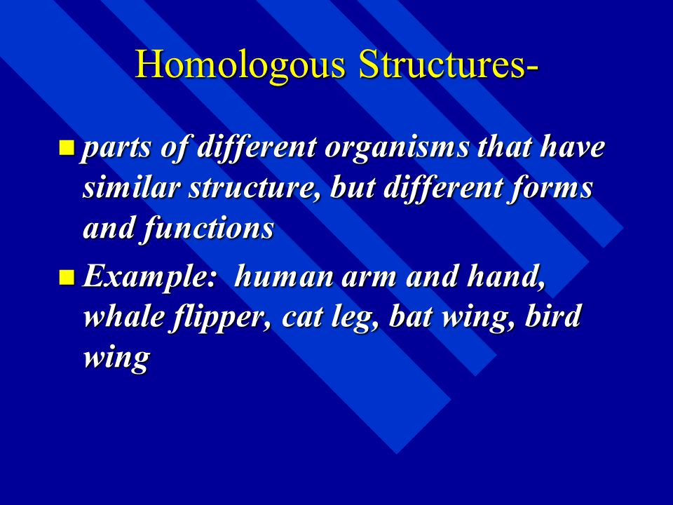 Supposed Evidence from Comparative Anatomy Comparative Anatomy- the study of structural similarities and differences between living things