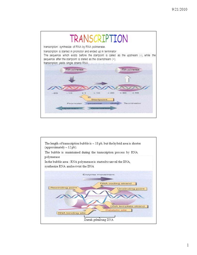 9/21/2010 2 Transcription Step: 1.