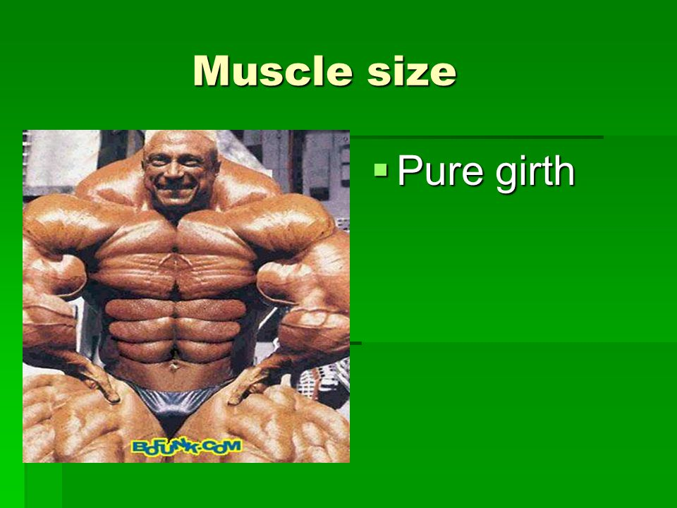 Muscle size Muscle size  Pure girth