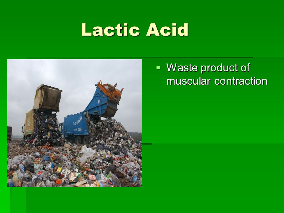 Lactic Acid Lactic Acid  Waste product of muscular contraction