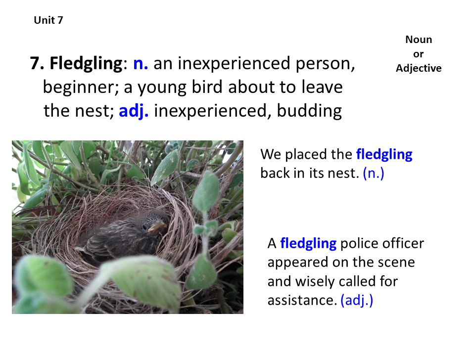 7. Fledgling: n. an inexperienced person, beginner; a young bird about to leave the nest; adj.