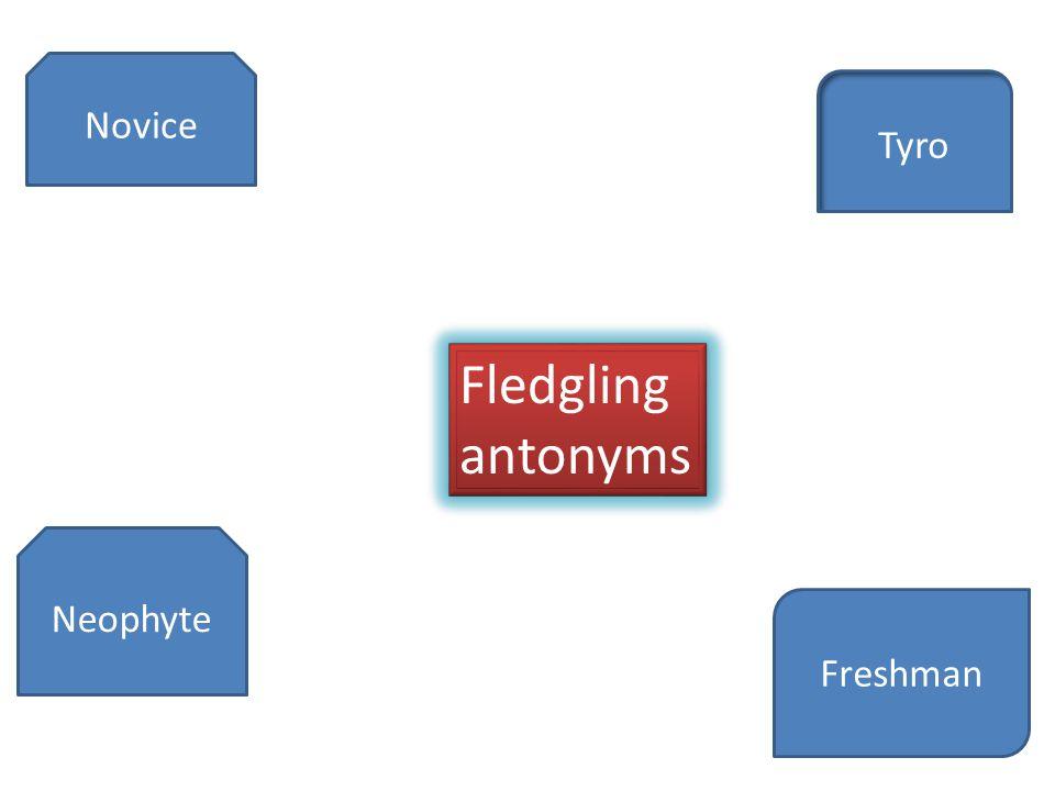 Novice Tyro Neophyte Freshman Fledgling antonyms Fledgling antonyms