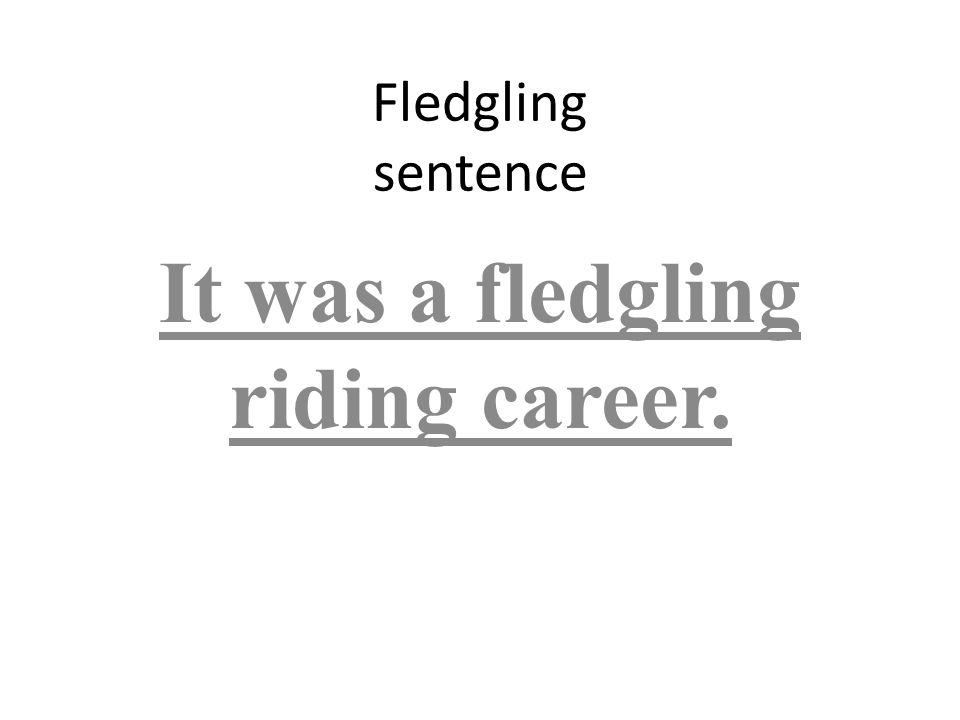 Fledgling sentence It was a fledgling riding career.