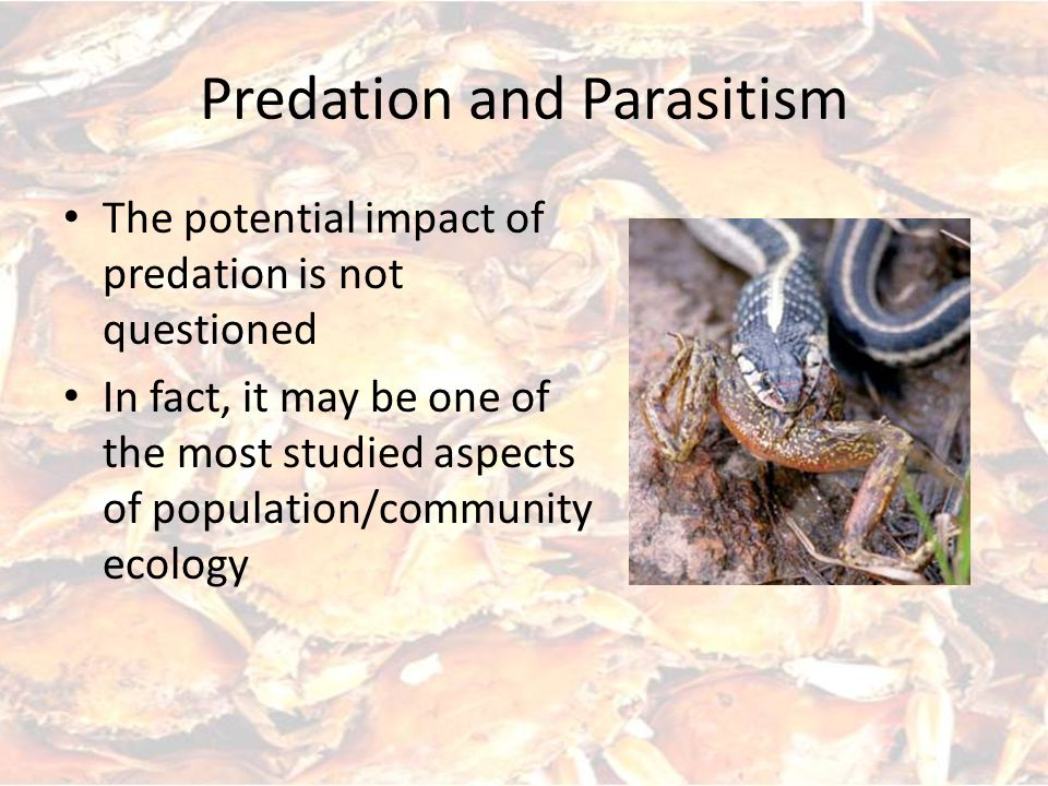 Predation and Parasitism The potential impact of predation is not questioned In fact, it may be one of the most studied aspects of population/community ecology