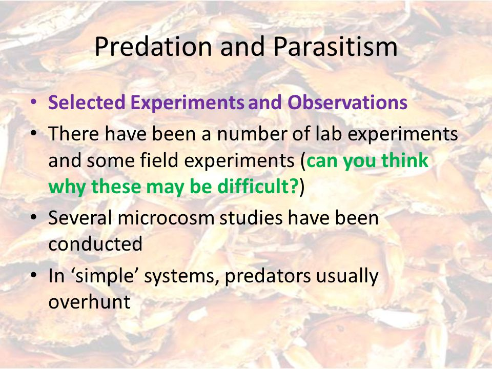 Predation and Parasitism Selected Experiments and Observations There have been a number of lab experiments and some field experiments (can you think why these may be difficult ) Several microcosm studies have been conducted In 'simple' systems, predators usually overhunt