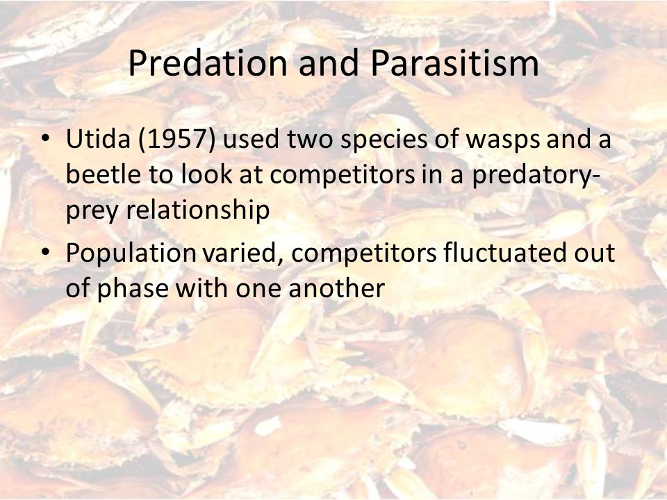 Utida (1957) used two species of wasps and a beetle to look at competitors in a predatory- prey relationship Population varied, competitors fluctuated out of phase with one another