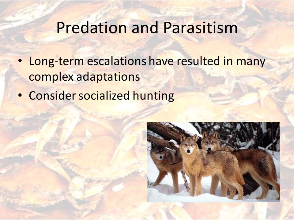 Predation and Parasitism Disruptive burst