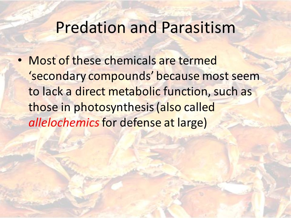 Predation and Parasitism Most of these chemicals are termed 'secondary compounds' because most seem to lack a direct metabolic function, such as those in photosynthesis (also called allelochemics for defense at large)