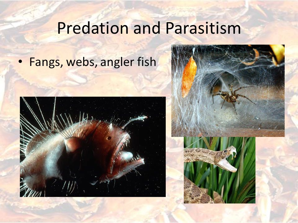 Predation and Parasitism Fangs, webs, angler fish