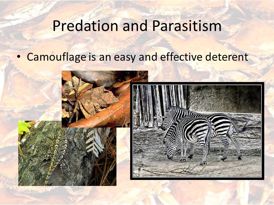 Predation and Parasitism Camouflage is an easy and effective deterent