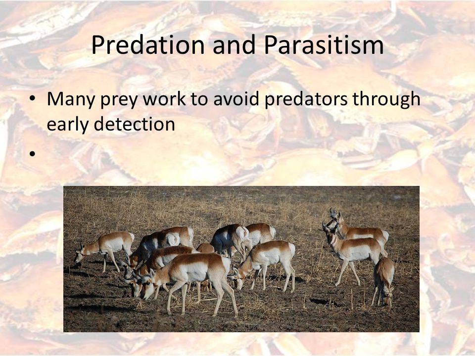 Predation and Parasitism Morphological adaptations