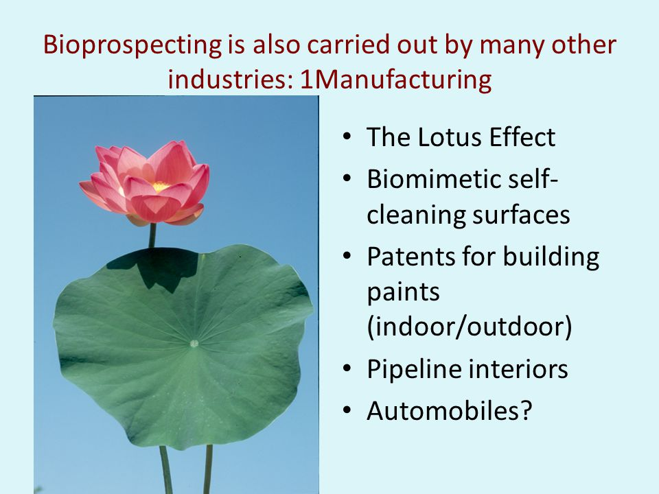 Bioprospecting is also carried out by many other industries: 1Manufacturing The Lotus Effect Biomimetic self- cleaning surfaces Patents for building paints (indoor/outdoor) Pipeline interiors Automobiles