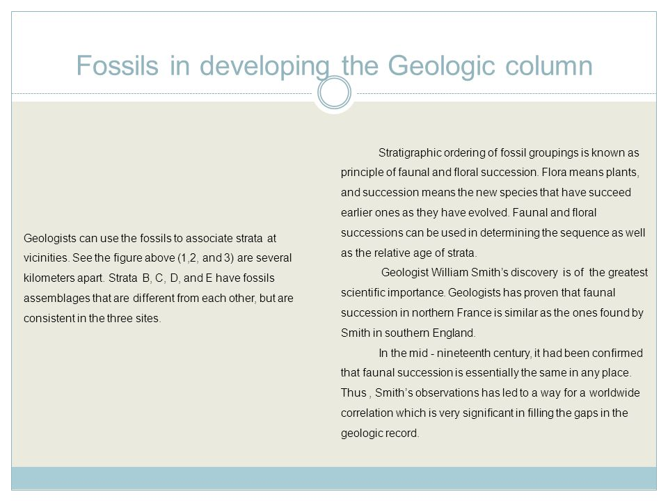 Fossils in developing the Geologic column Stratigraphic ordering of fossil groupings is known as principle of faunal and floral succession.