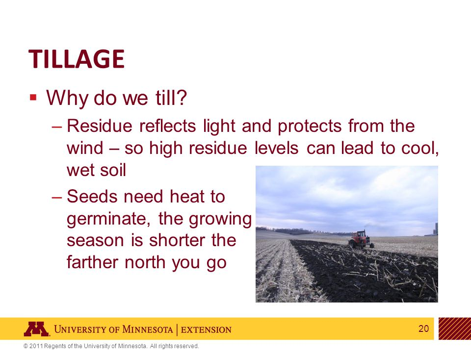 20 © 2011 Regents of the University of Minnesota. All rights reserved. TILLAGE  Why do we till? –Residue reflects light and protects from the wind –