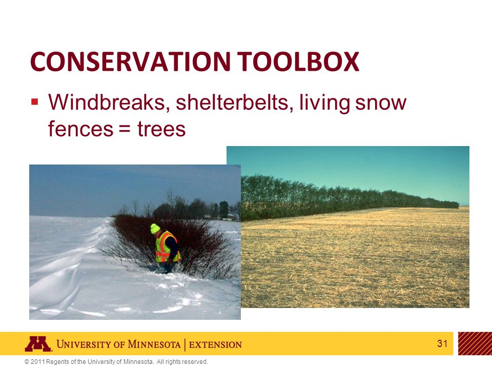 31 © 2011 Regents of the University of Minnesota. All rights reserved. CONSERVATION TOOLBOX  Windbreaks, shelterbelts, living snow fences = trees