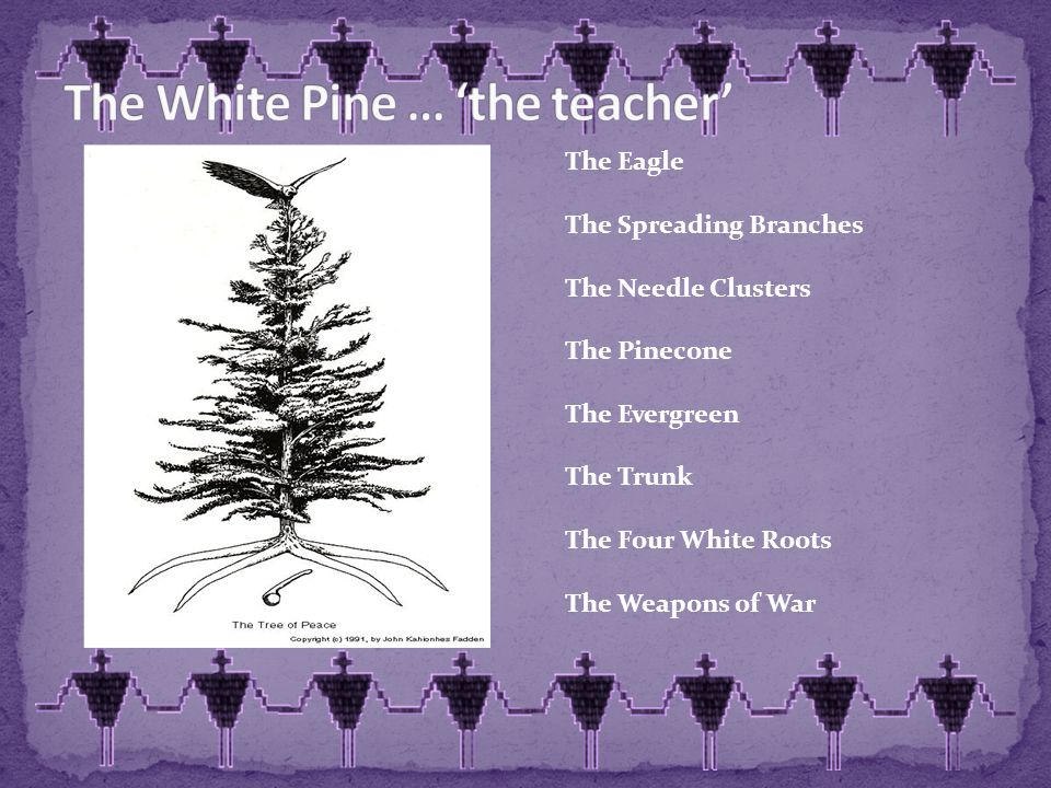 The Eagle The Spreading Branches The Needle Clusters The Pinecone The Evergreen The Trunk The Four White Roots The Weapons of War
