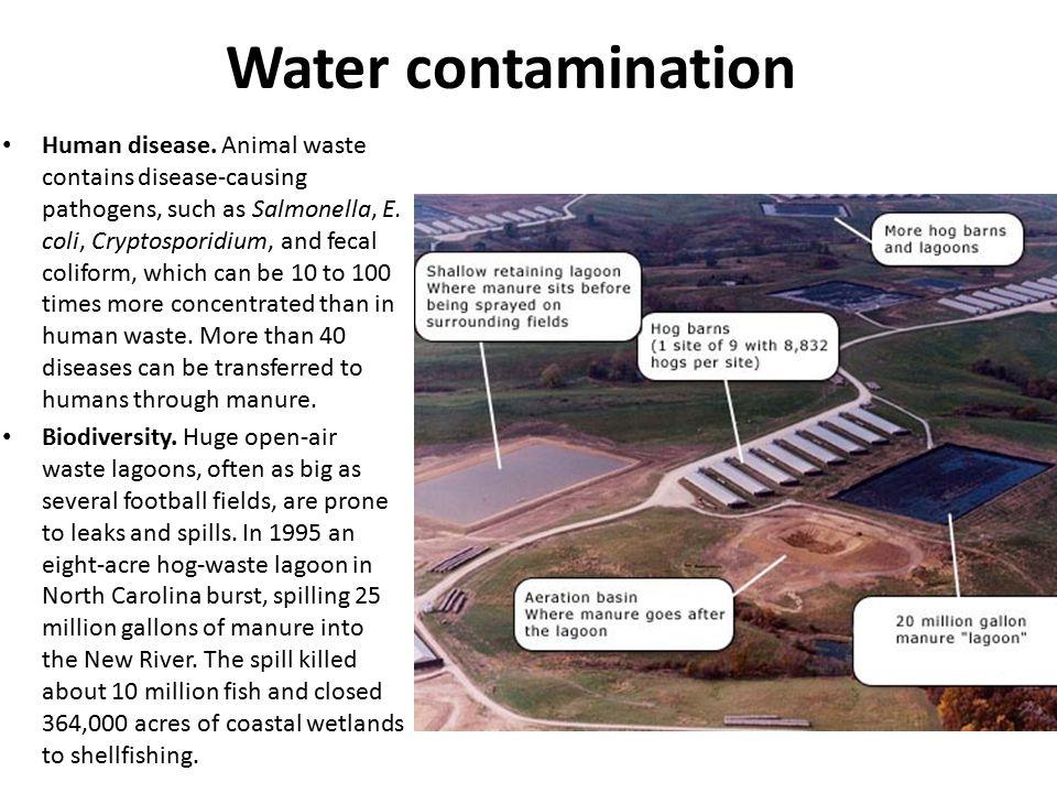 Water contamination Human disease. Animal waste contains disease-causing pathogens, such as Salmonella, E. coli, Cryptosporidium, and fecal coliform,