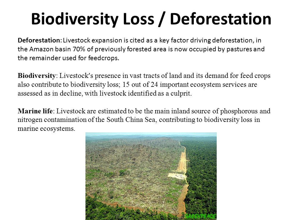 Biodiversity Loss / Deforestation Deforestation: Livestock expansion is cited as a key factor driving deforestation, in the Amazon basin 70% of previously forested area is now occupied by pastures and the remainder used for feedcrops.