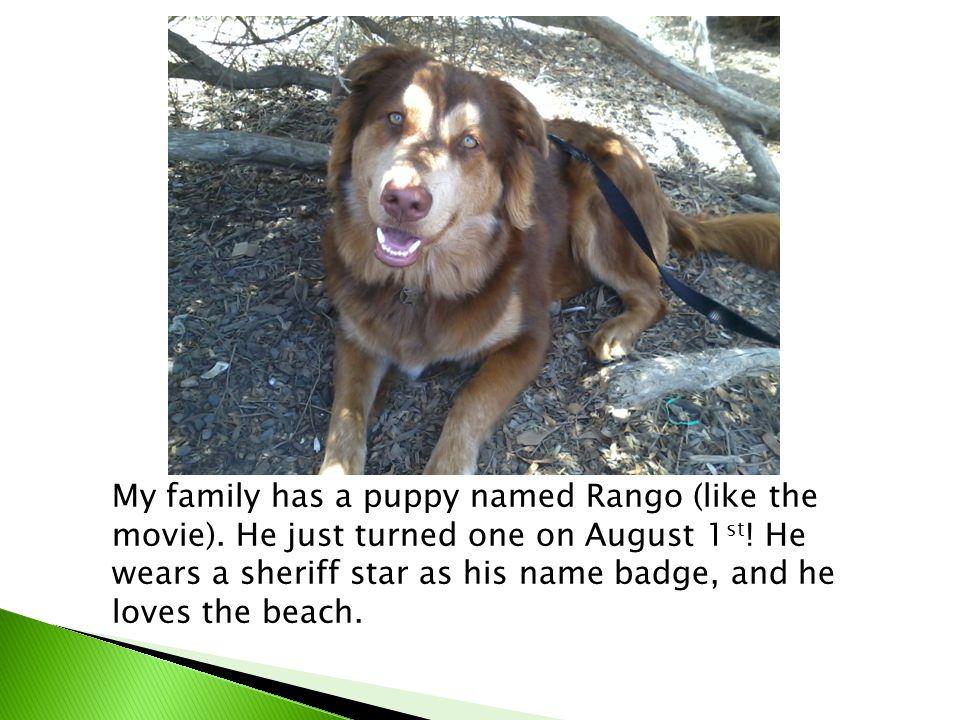 My family has a puppy named Rango (like the movie).