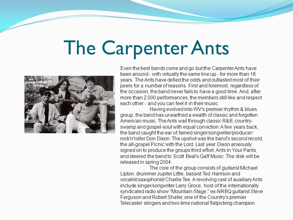 The Carpenter Ants Even the best bands come and go but the Carpenter Ants have been around - with virtually the same line up - for more than 16 years.