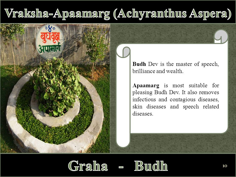 Budh Dev is the master of speech, brilliance and wealth. Apaamarg is most suitable for pleasing Budh Dev. It also removes infectious and contagious di
