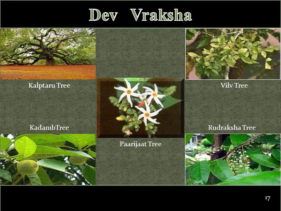 Kalptaru Tree Paarijaat Tree Rudraksha Tree Vilv Tree KadambTree 17
