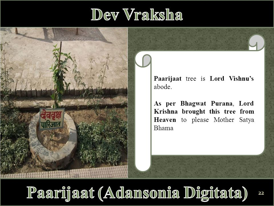 Paarijaat tree is Lord Vishnu's abode. As per Bhagwat Purana, Lord Krishna brought this tree from Heaven to please Mother Satya Bhama 22