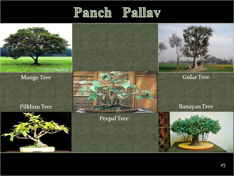Mango Tree Pilkhun Tree Peepal Tree Banayan Tree Gular Tree 25