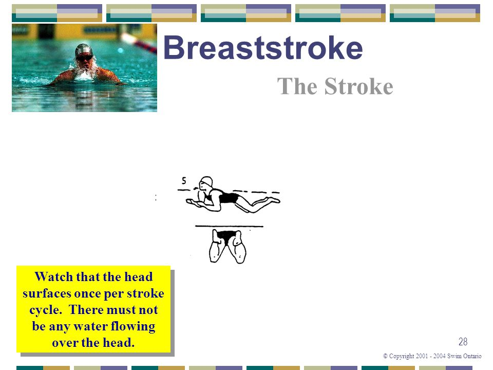 © Copyright 2001 - 2004 Swim Ontario 28 Watch that the head surfaces once per stroke cycle. There must not be any water flowing over the head. The Str