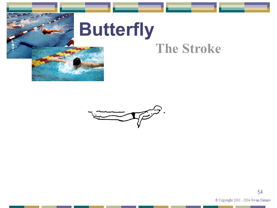© Copyright 2001 - 2004 Swim Ontario 54 The Stroke Butterfly