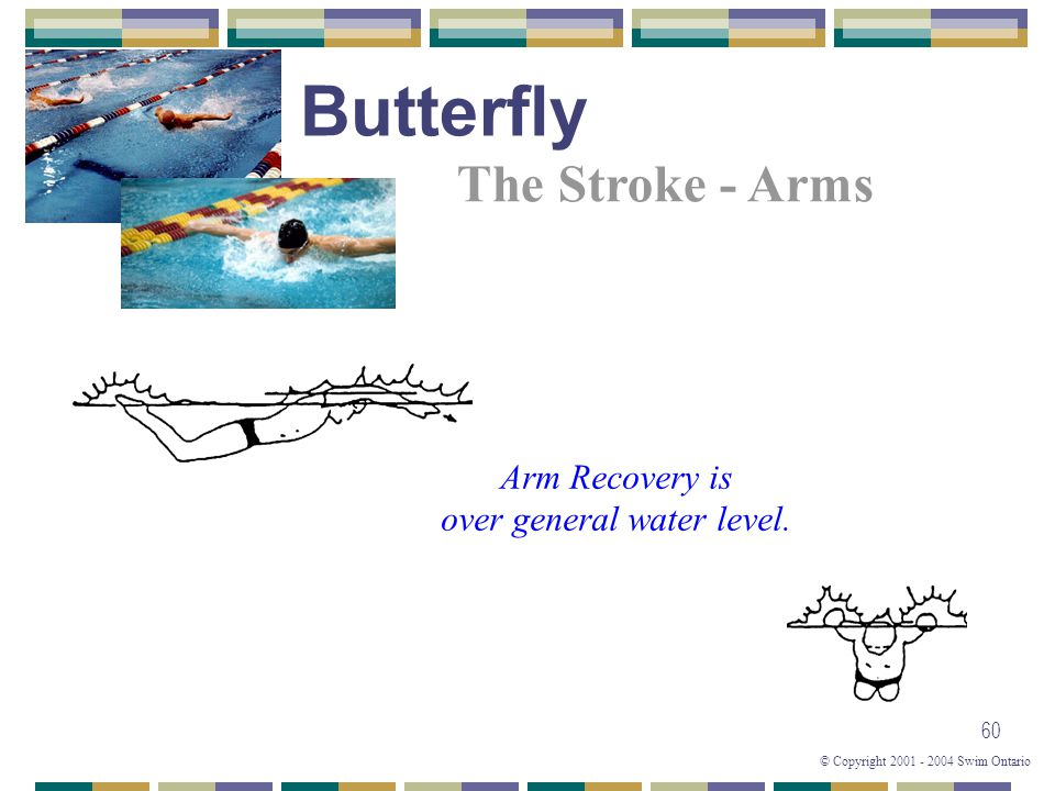 © Copyright 2001 - 2004 Swim Ontario 60 Arm Recovery is over general water level. The Stroke - Arms Butterfly