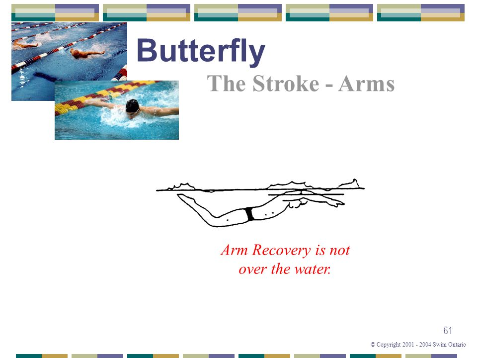 © Copyright 2001 - 2004 Swim Ontario 61 The Stroke - Arms Arm Recovery is not over the water. Butterfly