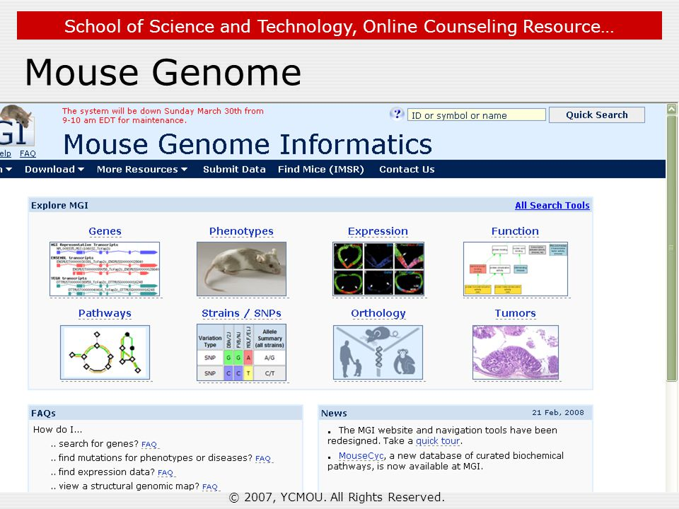 School of Science and Technology, Online Counseling Resource… Mouse Genome © 2007, YCMOU.