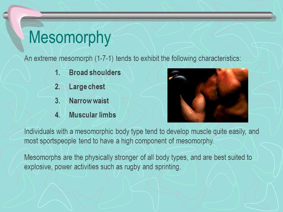 Mesomorphy An extreme mesomorph (1-7-1) tends to exhibit the following characteristics: 1.Broad shoulders 2.Large chest 3.Narrow waist 4.Muscular limbs Individuals with a mesomorphic body type tend to develop muscle quite easily, and most sportspeople tend to have a high component of mesomorphy.