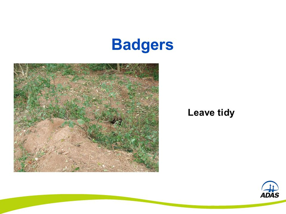 Leave tidy Badgers