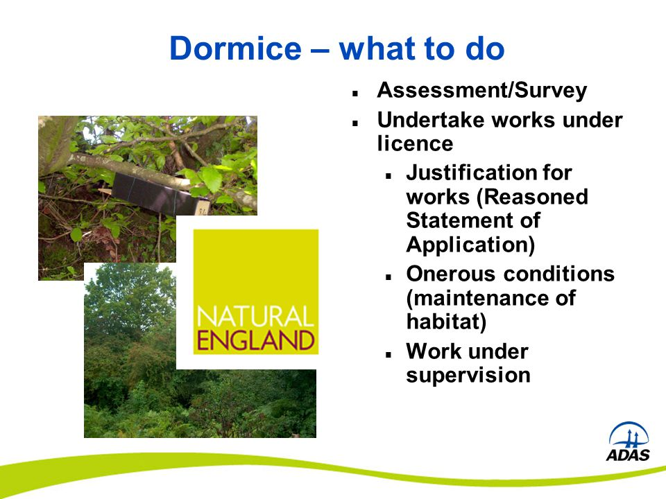 Dormice – what to do Assessment/Survey Undertake works under licence Justification for works (Reasoned Statement of Application) Onerous conditions (m