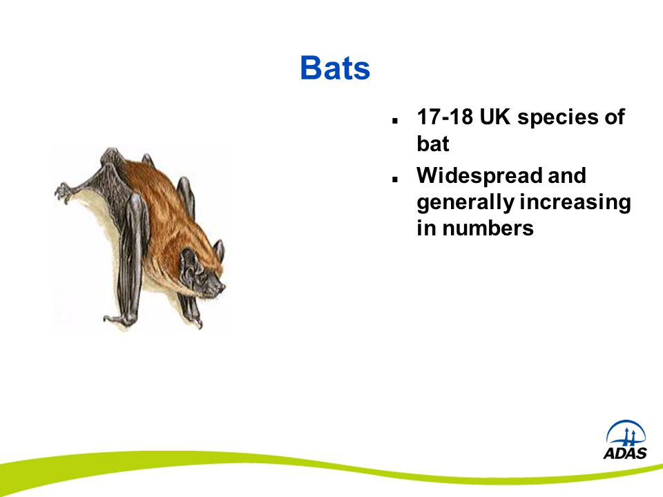 Bats 17-18 UK species of bat Widespread and generally increasing in numbers
