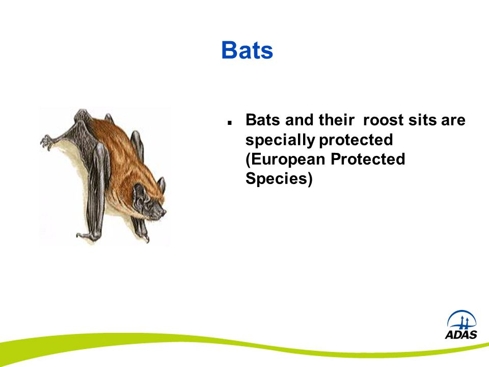 Bats Bats and their roost sits are specially protected (European Protected Species)