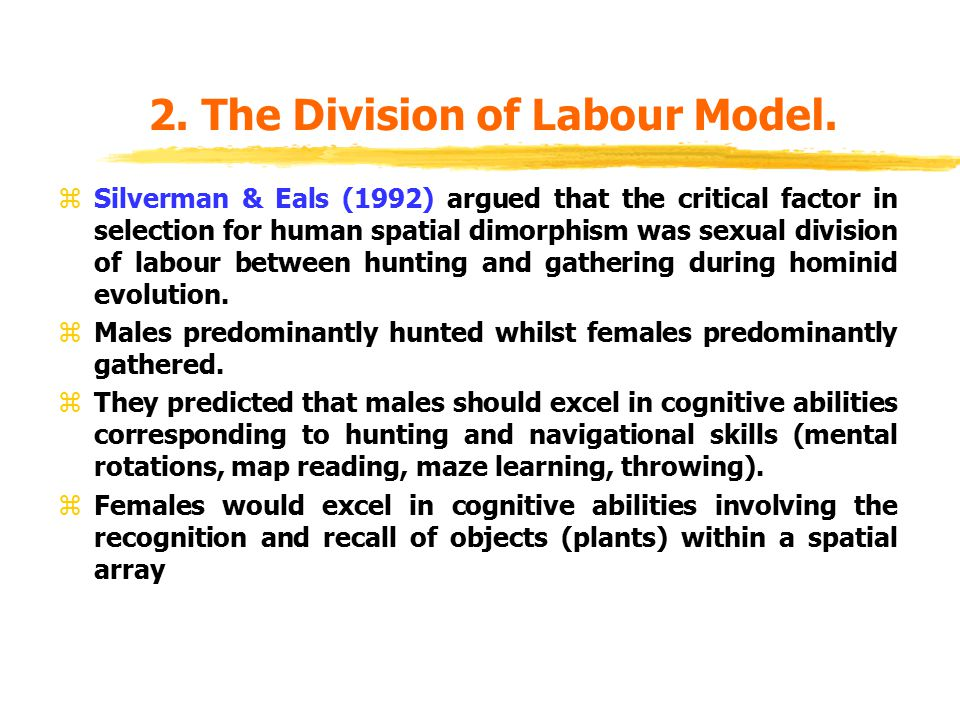 2. The Division of Labour Model. zSilverman & Eals (1992) argued that the critical factor in selection for human spatial dimorphism was sexual divisio