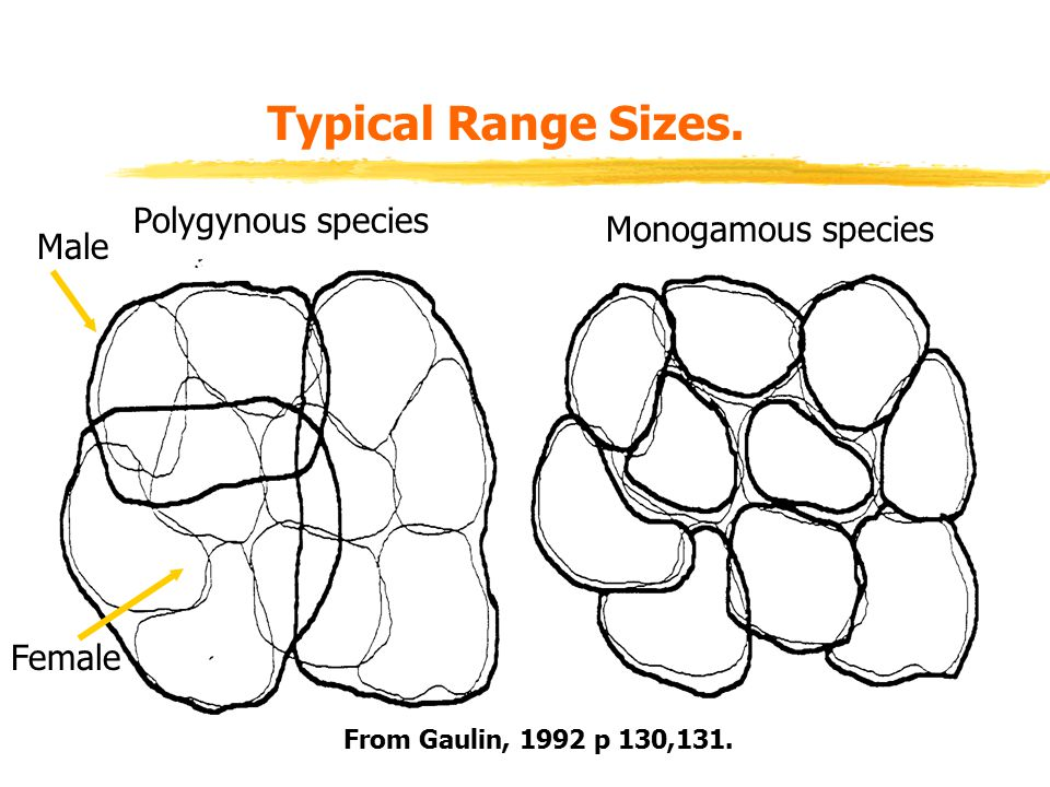 Typical Range Sizes. Female Male Polygynous species Monogamous species From Gaulin, 1992 p 130,131.