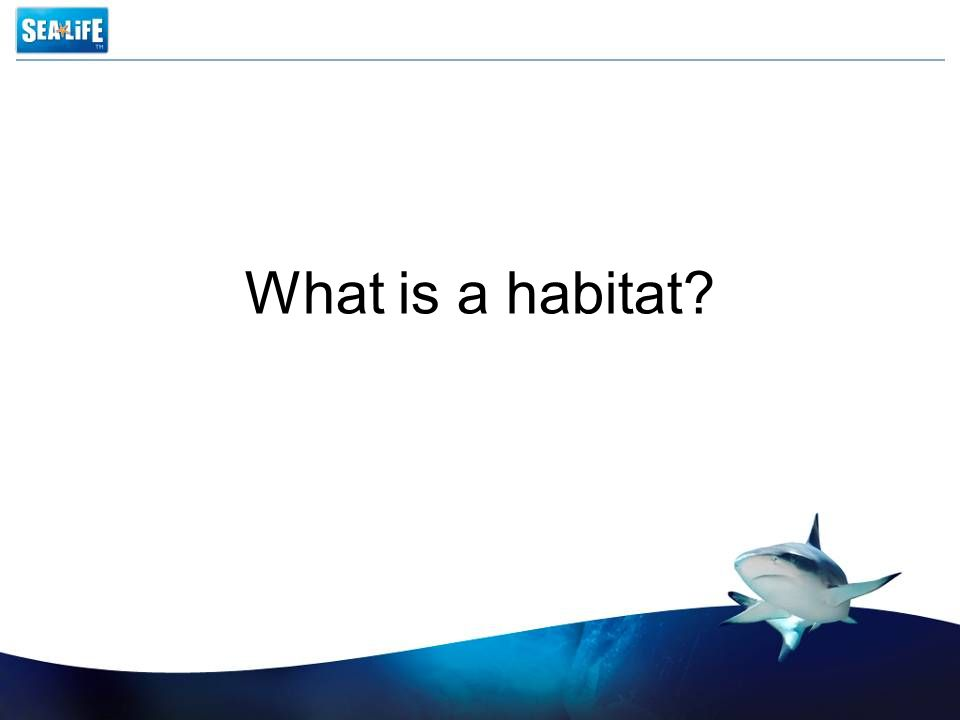 Habitats A habitat is an environment with conditions which are suitable for a certain animal.