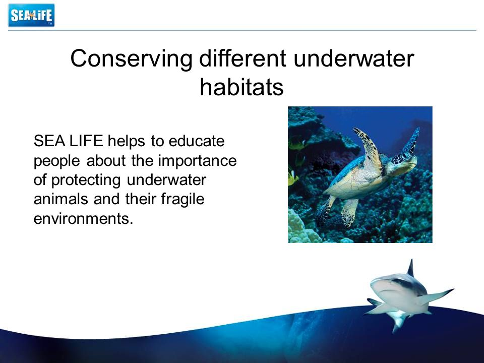 Conserving different underwater habitats SEA LIFE helps to educate people about the importance of protecting underwater animals and their fragile environments.