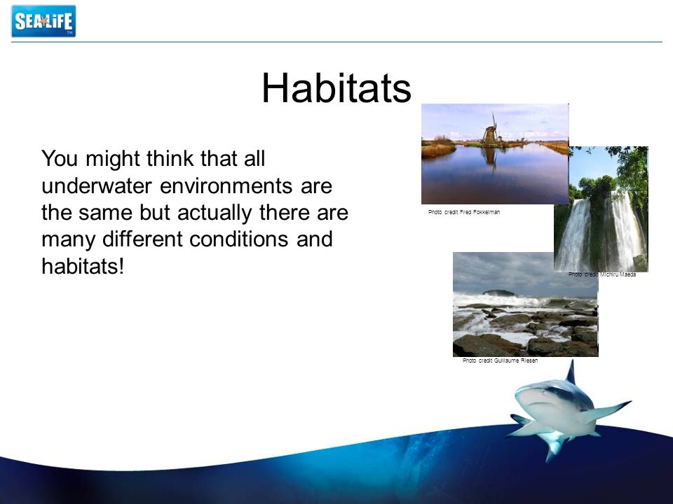 Habitats Different animals need different conditions to survive.