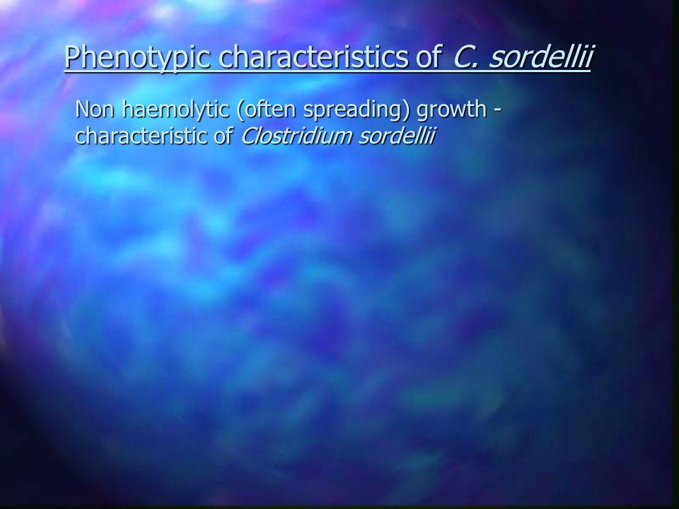 Non haemolytic (often spreading) growth - characteristic of Clostridium sordellii Phenotypic characteristics of C.