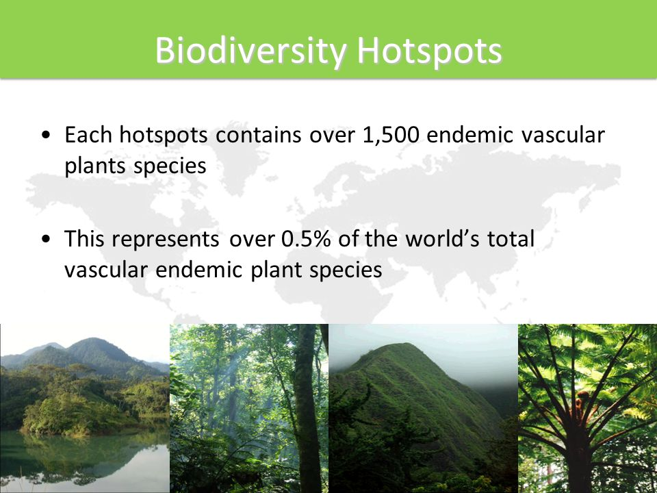 Each hotspots contains over 1,500 endemic vascular plants species This represents over 0.5% of the world's total vascular endemic plant species